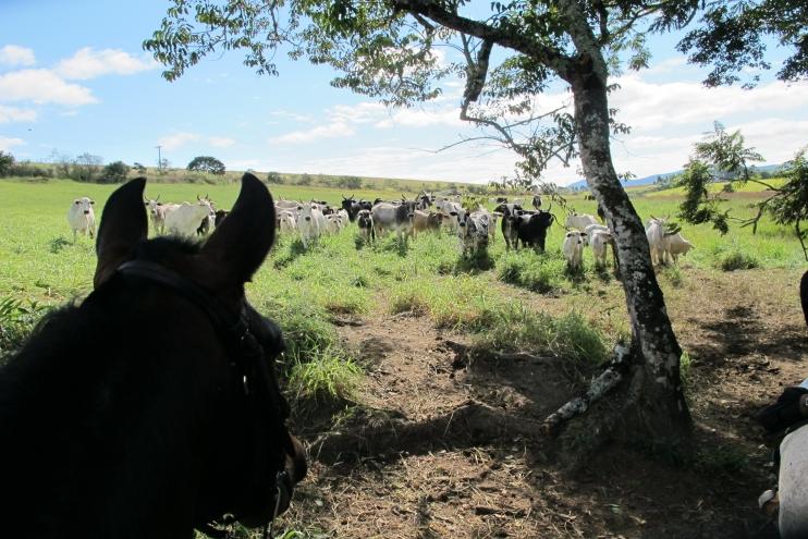 Campo Lindo - Lobos - Sul de Minas