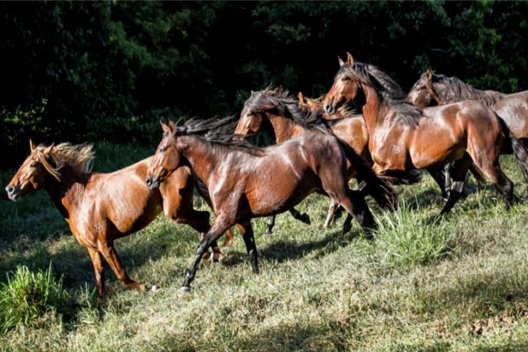 Bem-Estar Equestre é foco de dia de campo do Haras das 8 Virtudes
