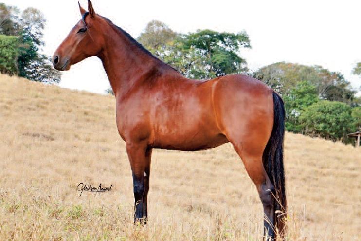 Gloria V8 na Revista Horse