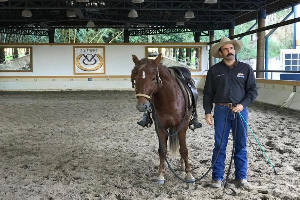 Curso de Equitação, Doma e Rédeas