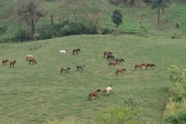 Construindo um cavalo Marchador diferenciado
